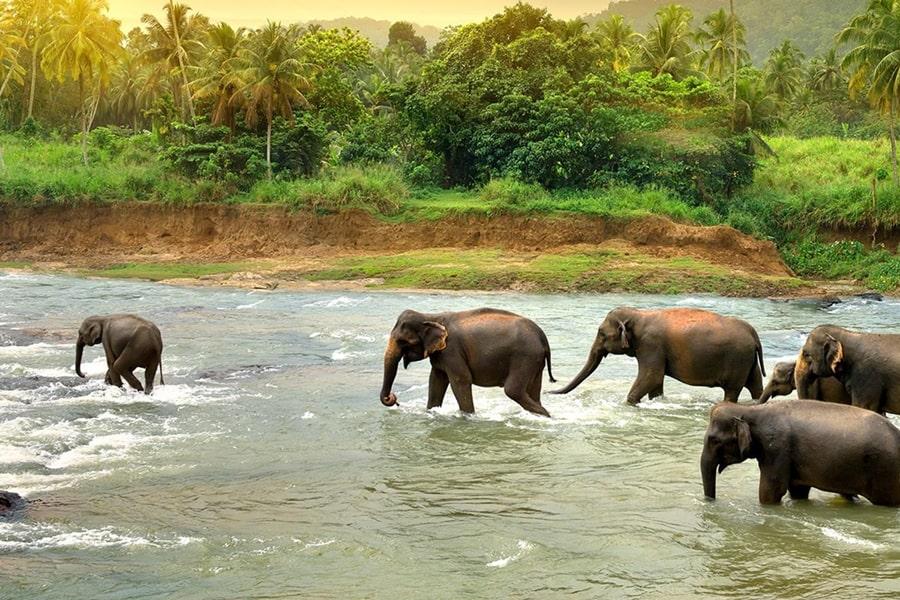 スリランカの河川
